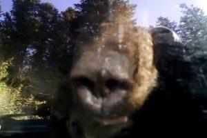 Bear-Locks-Himself-Inside-A-Car