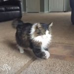 Cat's Front Legs Don't Work But He Doesn't Care