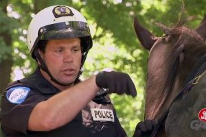Cop-Goes-Horse-Riding-Backwards-Just-For-Laughs-Gags