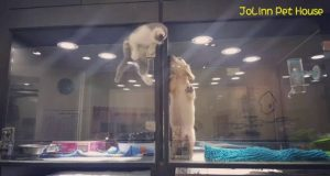 Cute-Kitten-Escapes-Cage-to-Play-With-Puppy