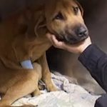 'Dead' Dog Comes Back To Life With A Little Love