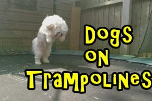 Dogs-on-Trampolines-Compilation-2016-NEW