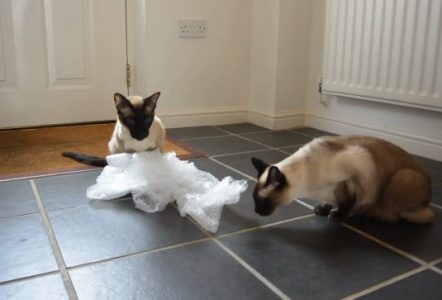 Funny-Cats-and-Dogs-vs-Bubble-Wrap-Compilation-2016