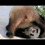 Life of cute animals is full of funny moments