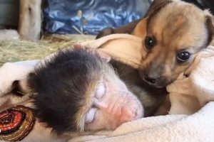 Puppy-Really-Really-Wants-To-Snuggle-With-Monkey