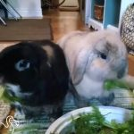 Rescue Rabbits Solve Puzzles Together