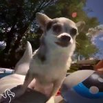 Senior Chihuahua Loves Going On Adventures