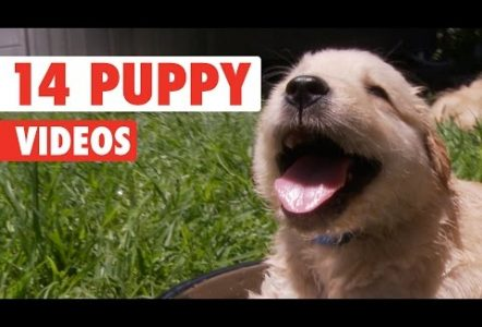 14-Funny-Puppy-Videos-Compilation-2016