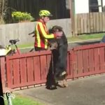 Mailman Always Stops To Give His Favorite Dog A Hug