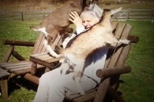 Rescued-Baby-Goats-Cant-Get-Enough-Attention-From-Their-New-Family