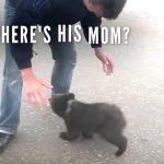 Cutest Baby Bear Just Want a Hug