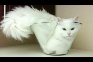 Cats-are-super-funny-creatures-that-make-us-laugh-Funny-cat-kitten-compilation