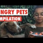 Hungry Pets Video Compilation 2016