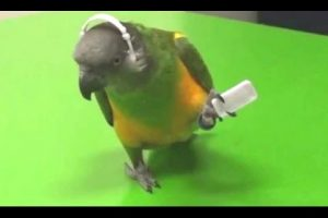 Parrots-Dancing-A-Funny-Parrot-Videos-Compilation-NEW-HD