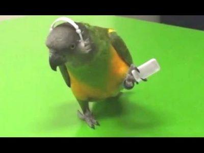 Parrots-Dancing-A-Funny-Parrot-Videos-Compilation-NEW-HD