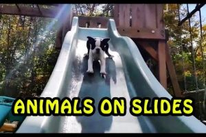 The-Ultimate-Animals-Playing-on-Slides-Compilation-NEW