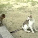 Baby Monkey and Cat Playing Together