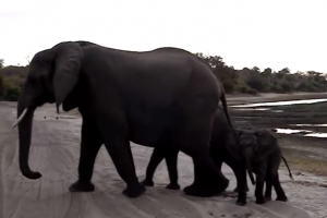 elephant-sneezes