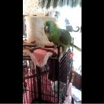 Singing, Talking, Crying. This Parrot Can Do It All.