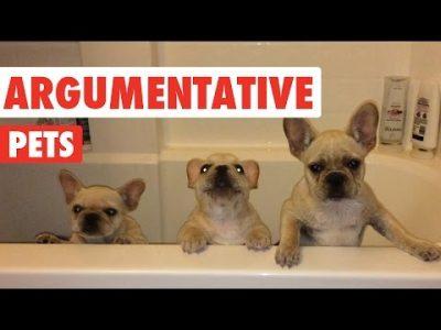 Argumentative-Pets-Video-Compilation-2016