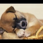 Cute Sleepy Puppies and Kittens