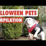 Halloween Pets Video Compilation 2