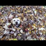 It's Finally Fall, And This Dog Is SO Excited