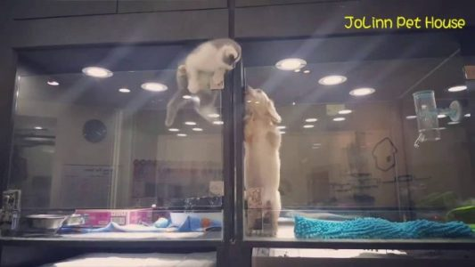 Kitten-Makes-Great-Escape-to-Visit-Puppy-HD-from-JoLinn-Pet-House