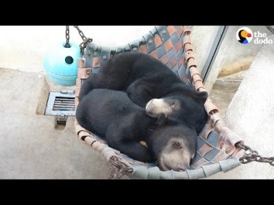 Orphaned-Bears-Meet-And-Become-The-Best-Of-Friends