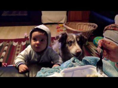 Talking-Dog-Says-Mama