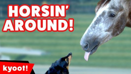 The-Funniest-Horse-Pony-Videos-of-2016-Weekly-Compilation-Kyoot-Animals