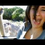 The Most Ridiculous & Hilarious ANIMAL Moments #11