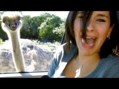 The-most-ridiculous-hilarious-ANIMAL-moments-11-Funny-animal-compilation-Watch-laugh