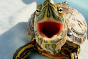 Top-10-Funny-Turtle-Tortoise-Videos-Compilation-2016