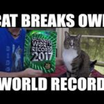 Most Tricks by a Cat in a Minute