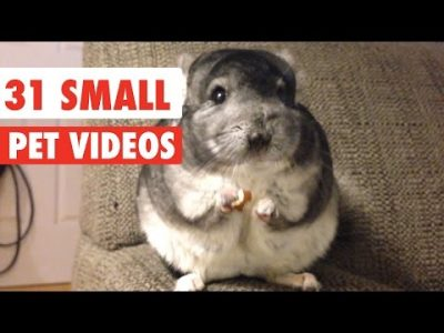 31-Small-Pet-Videos-Compilation-2016