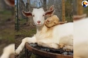 Animals-Who-Are-Thankful-For-Each-Other