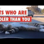 Cats Who Are Cooler Than You
