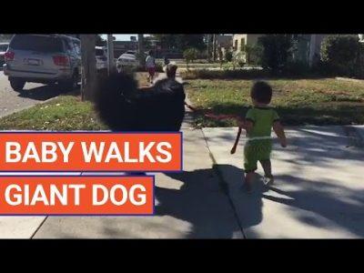 Cute-Baby-Walks-Giant-Dog-Video-2016-Daily-Heart-Beat