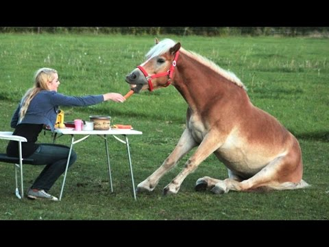 Funny Horses – Try Not To Laugh – 1Funny.com
