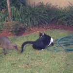 Epic Backyard Standoff Between Cat and Bird