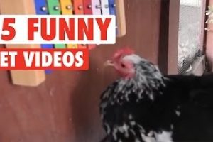15-Funny-Pet-Videos-Compilation-2016