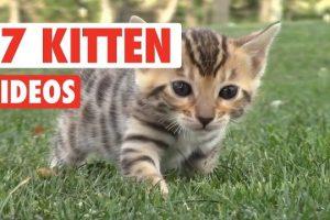 17-Funny-Kitten-Videos-Compilation-2017