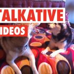 17 Funny Talkative Pets Video Compilation