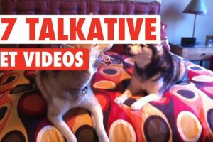 17-Funny-Talkative-Pets-Video-Compilation-2017