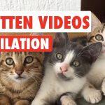 18 Kitten Videos Compilation 2017