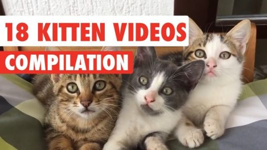 18-Kitten-Videos-Compilation-2017