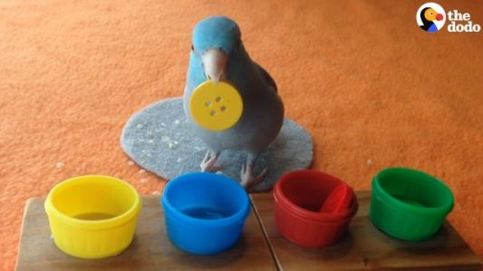 Bird-Knows-The-Coolest-Trick