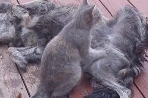 Cats-Giving-Massages-is-Oddly-Satisfying
