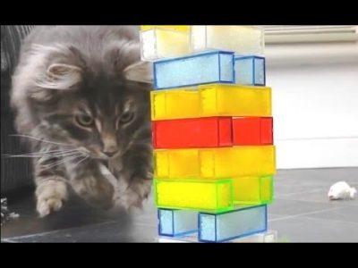 Cats-Playing-Jenga-Compilation-CFS